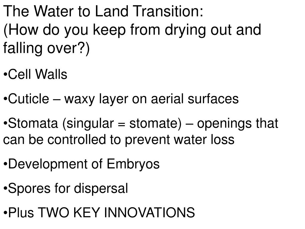 The Water to Land Transition:
