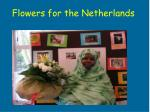flowers for the netherlands