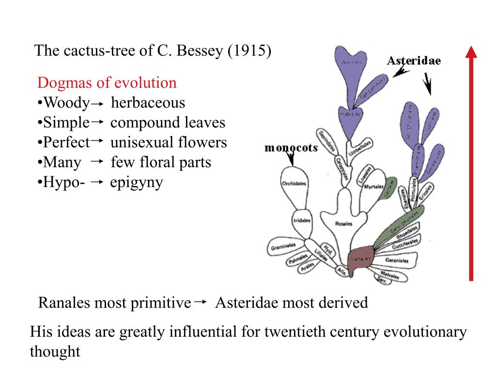 PPT - Angiosperm Classification From Linnaeus to the ...