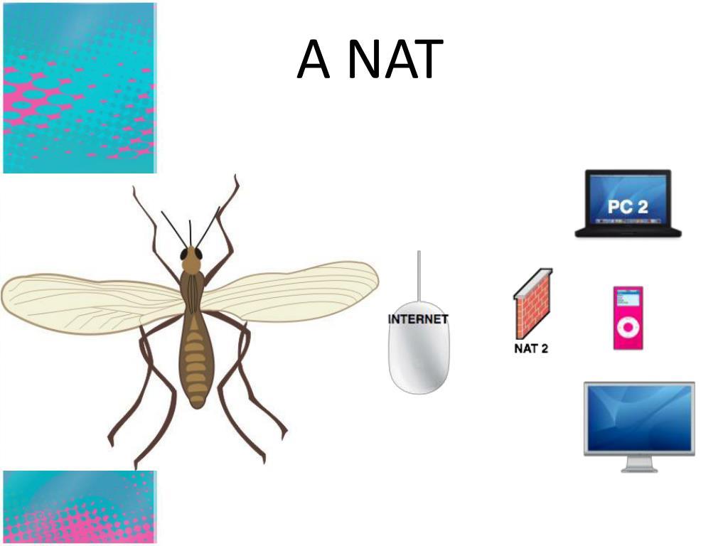 A NAT