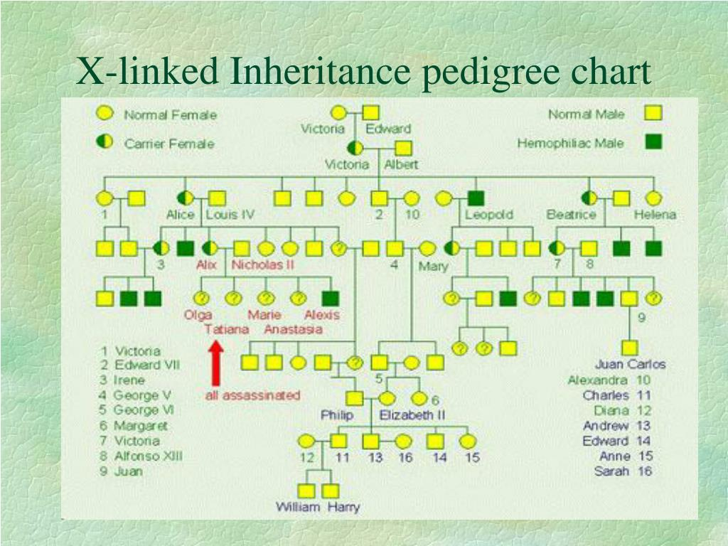 X-linked Inheritance pedigree chart