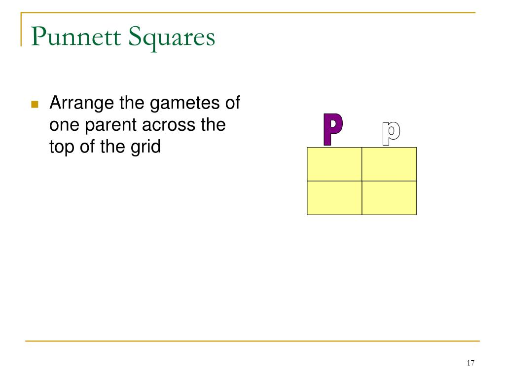Arrange the gametes of one parent across the top of the grid