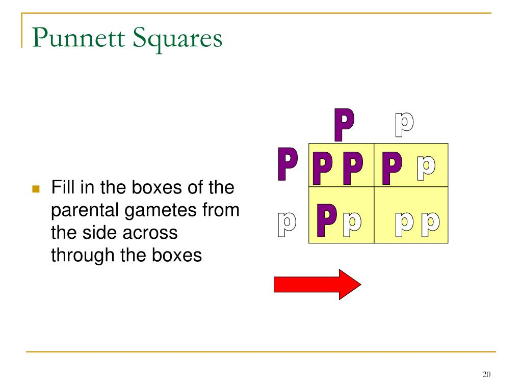 Fill in the boxes of the parental gametes from the side across  through the boxes