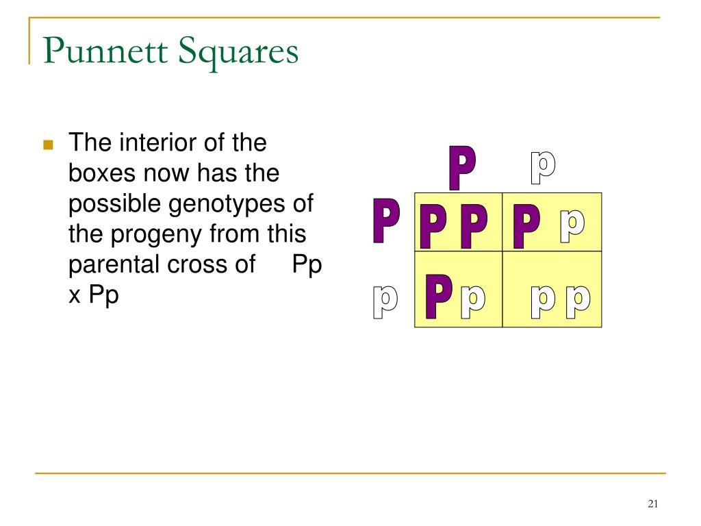 The interior of the boxes now has the possible genotypes of the progeny from this parental cross of     Pp x Pp
