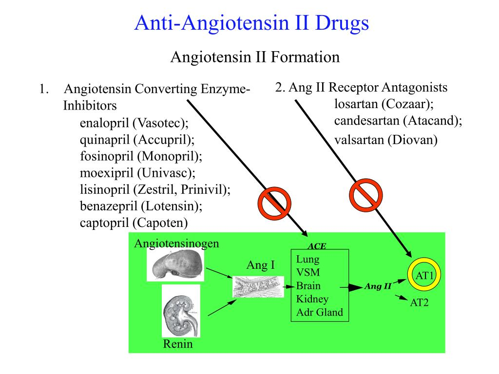 2. Ang II Receptor Antagonists