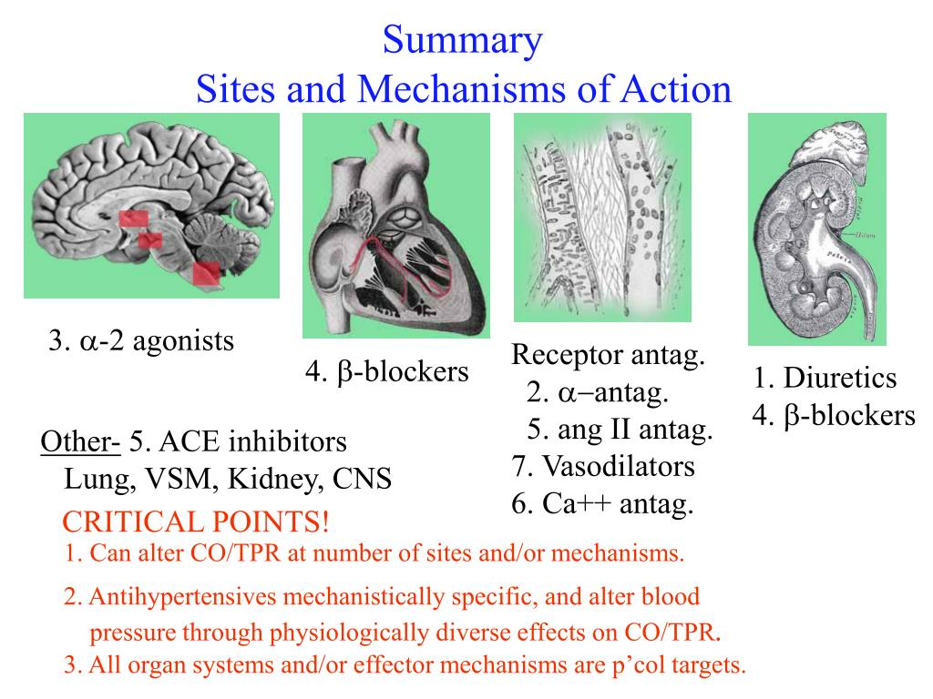 1. Can alter CO/TPR at number of sites and/or mechanisms.
