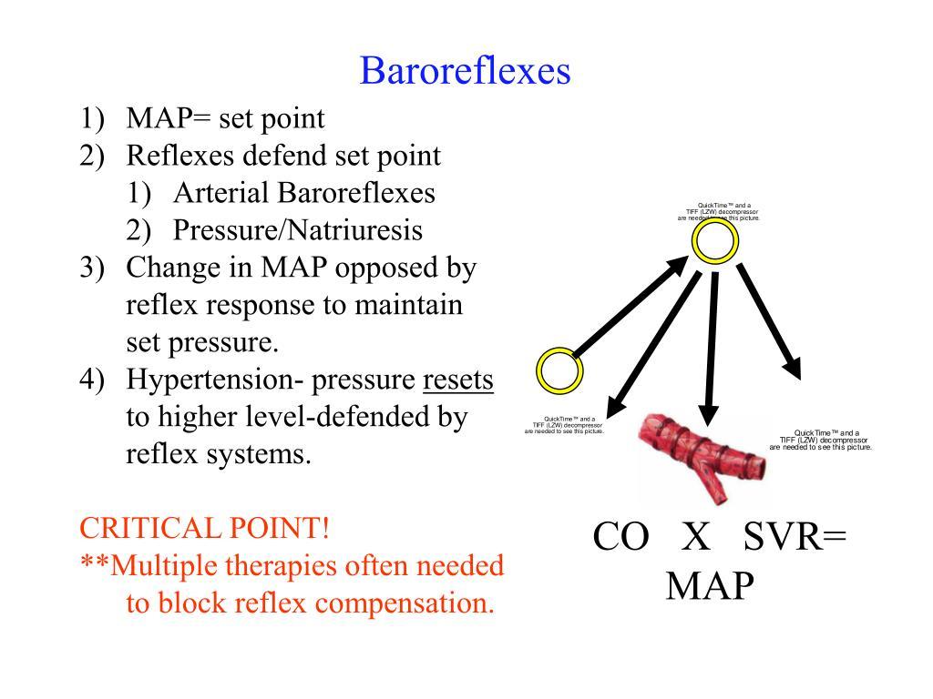 Baroreflexes