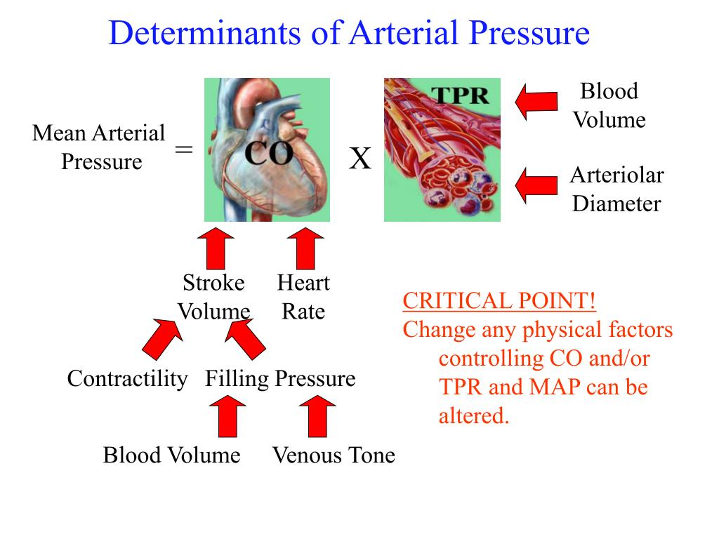 Determinants of Arterial Pressure
