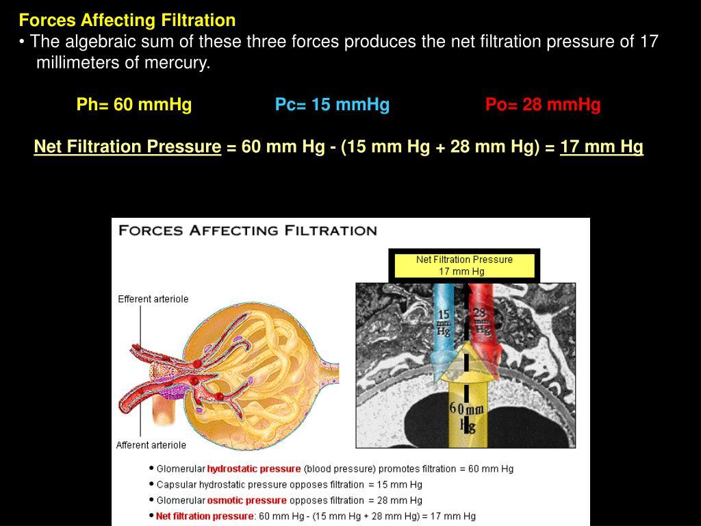 Forces Affecting Filtration