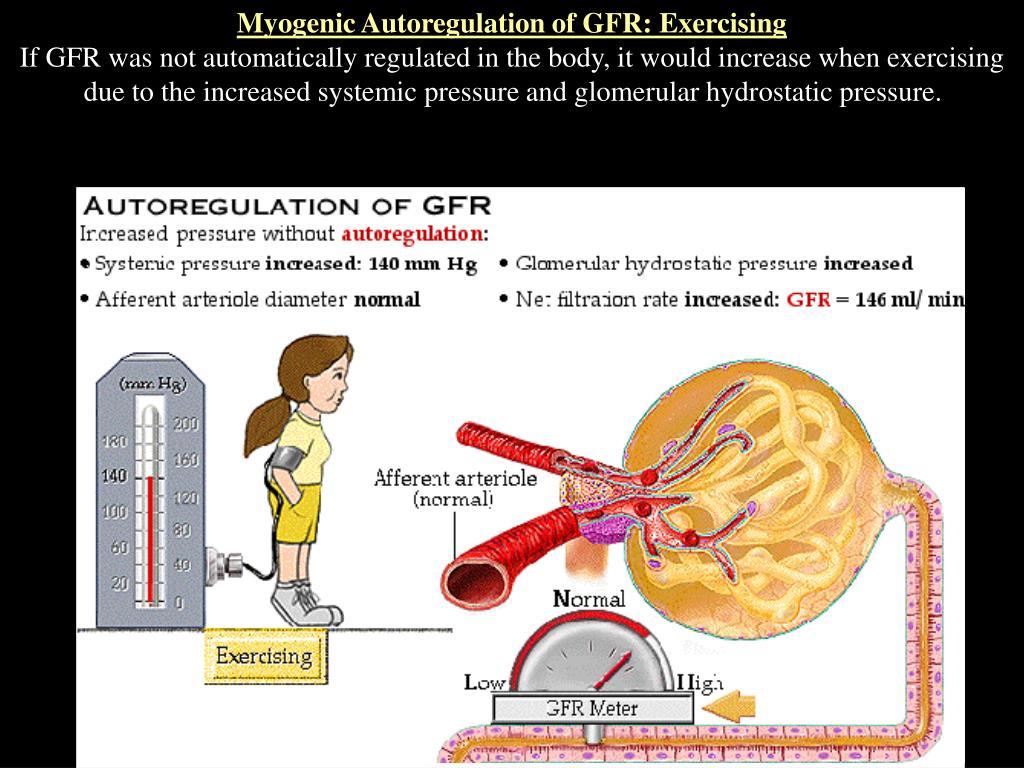 Myogenic Autoregulation of GFR: Exercising