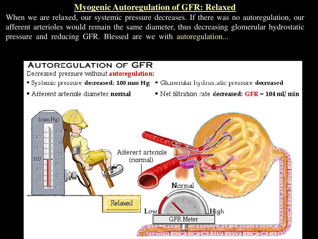 Myogenic Autoregulation of GFR: Relaxed