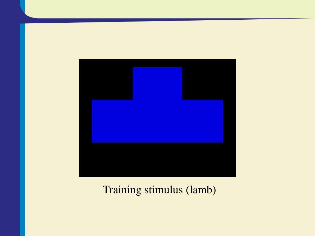 Training stimulus (lamb)