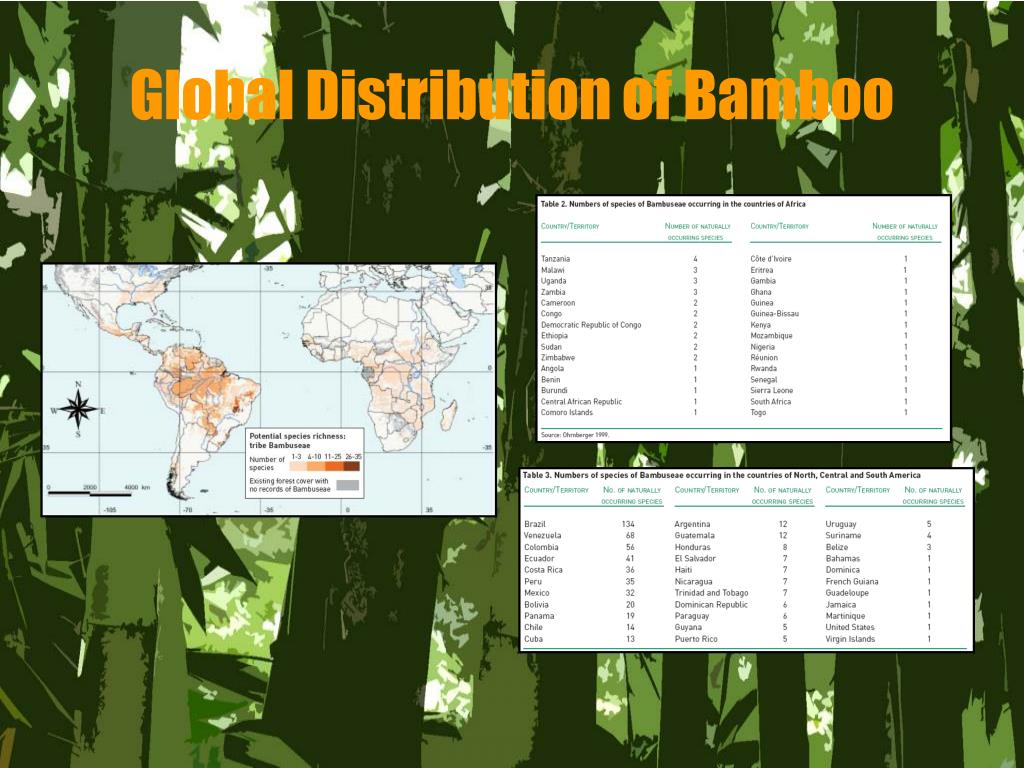 Global Distribution of Bamboo