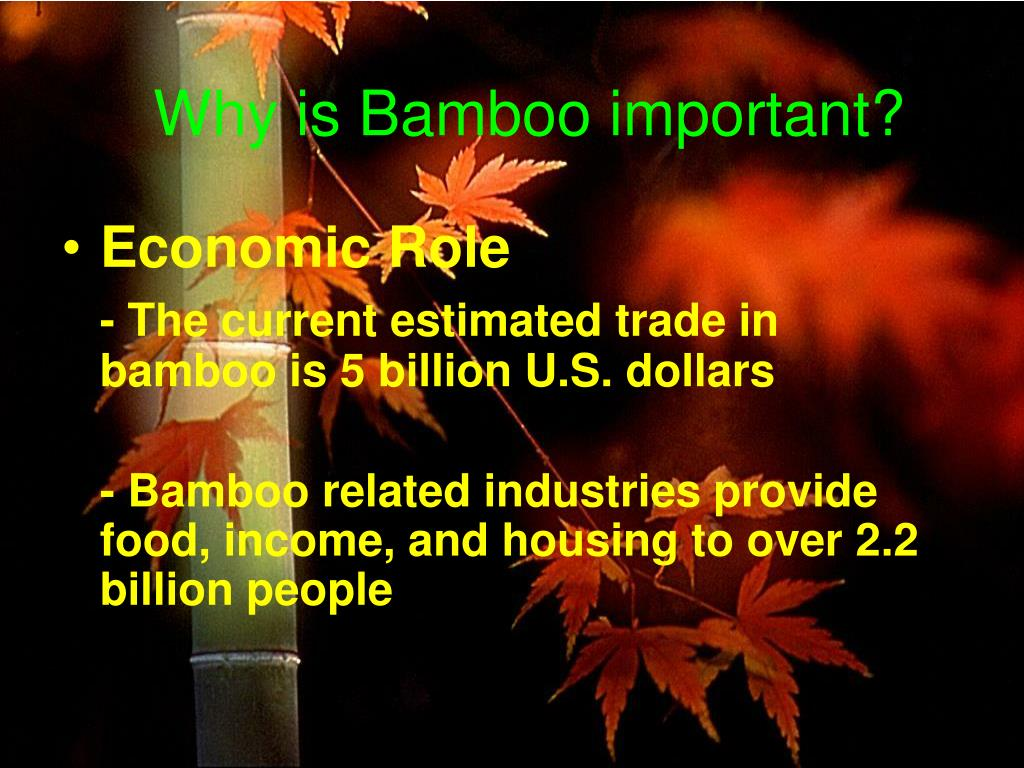 Why is Bamboo important?