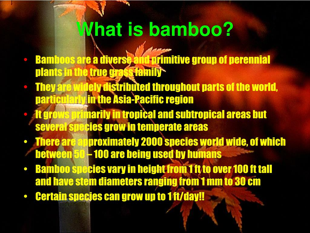 Bamboos are a diverse and primitive group of perennial plants in the true grass family