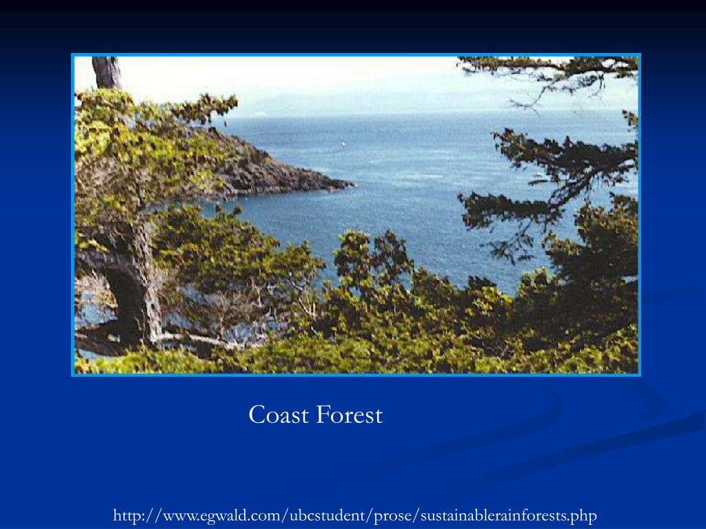 Coast Forest