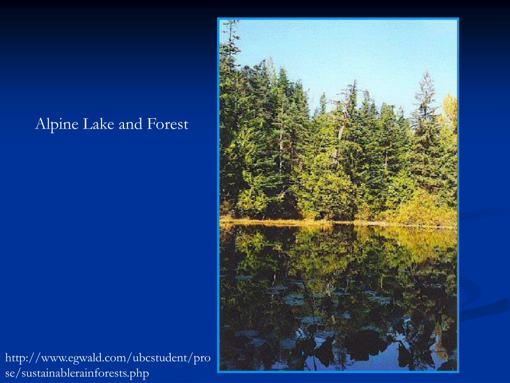 Alpine Lake and Forest
