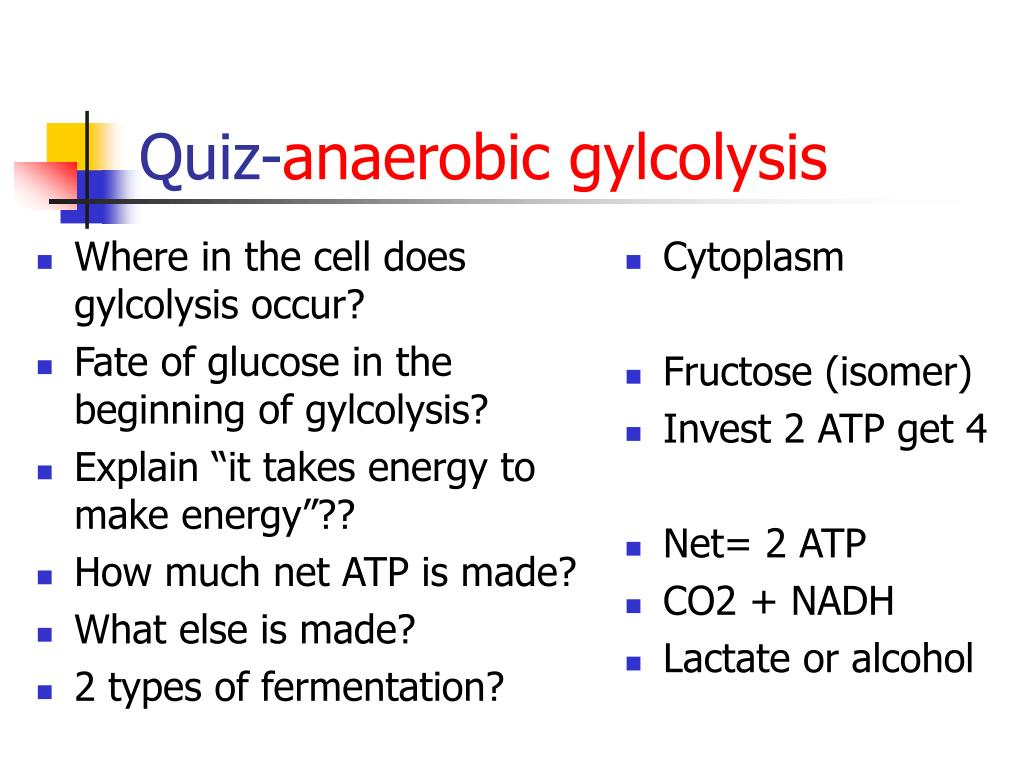 Where in the cell does gylcolysis occur?