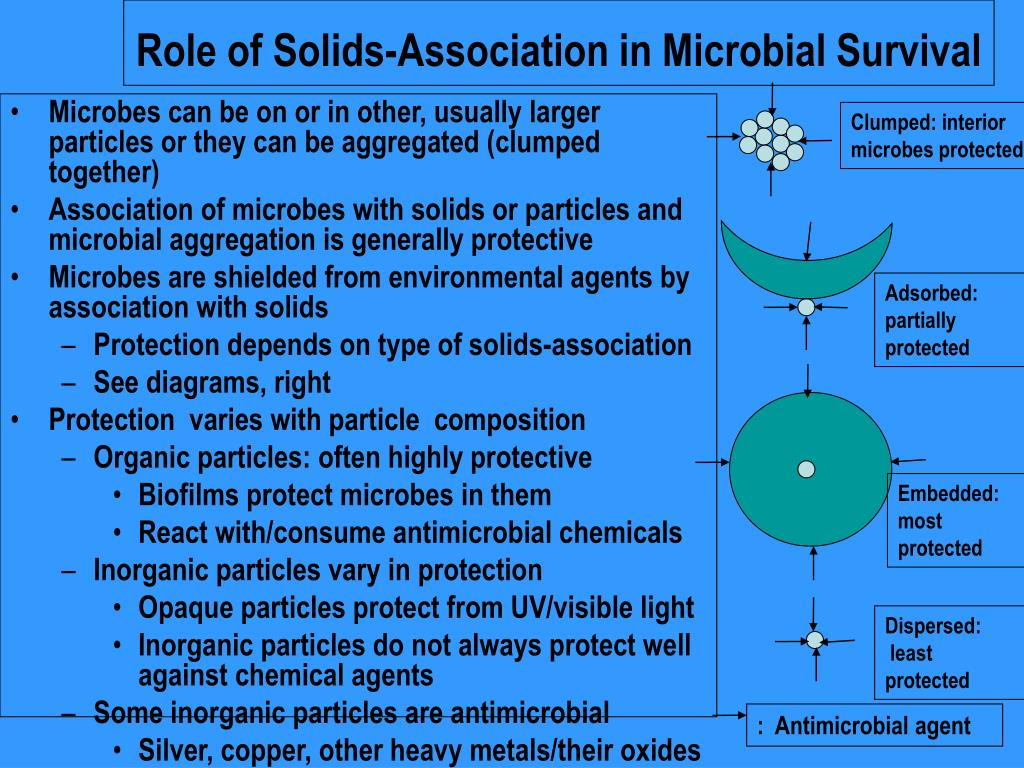 Role of Solids-Association in Microbial Survival