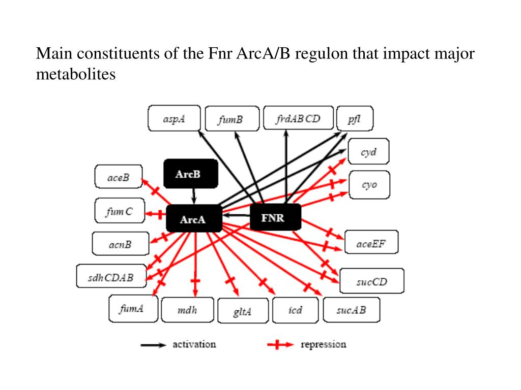 Main constituents of the Fnr ArcA/B regulon that impact major metabolites