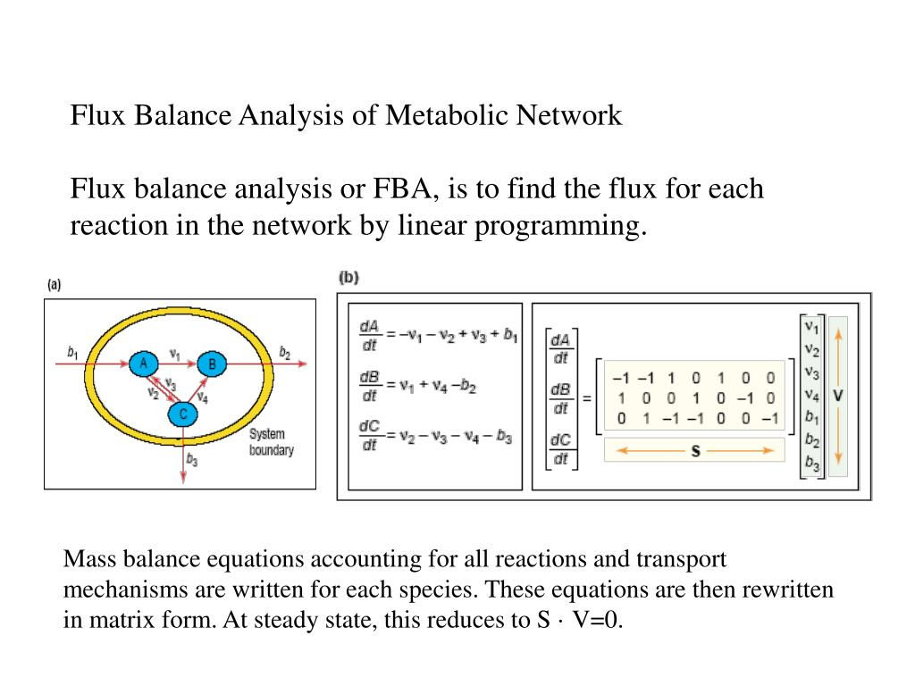 Flux Balance Analysis of Metabolic Network