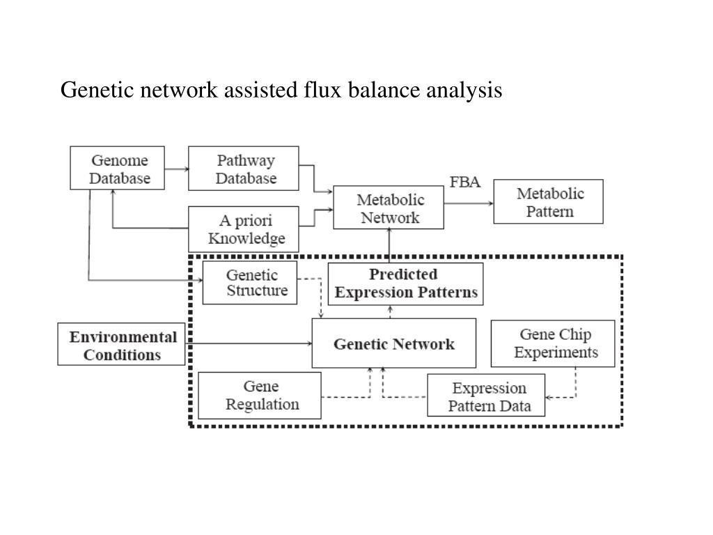 Genetic network assisted flux balance analysis
