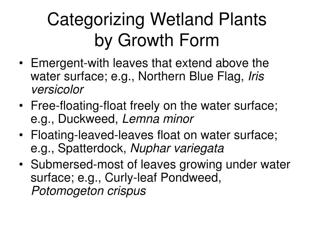 Categorizing Wetland Plants