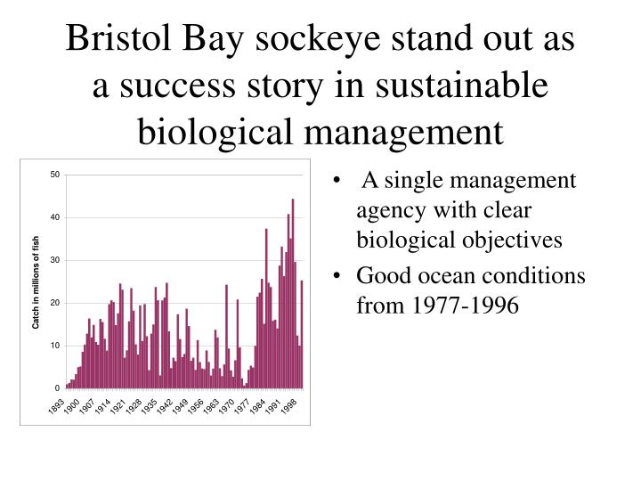 Bristol Bay sockeye stand out as a success story in sustainable biological management