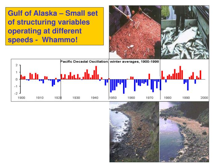 Gulf of Alaska – Small set of structuring variables operating at different speeds -  Whammo!