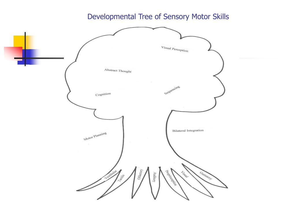 Developmental Tree of Sensory Motor Skills