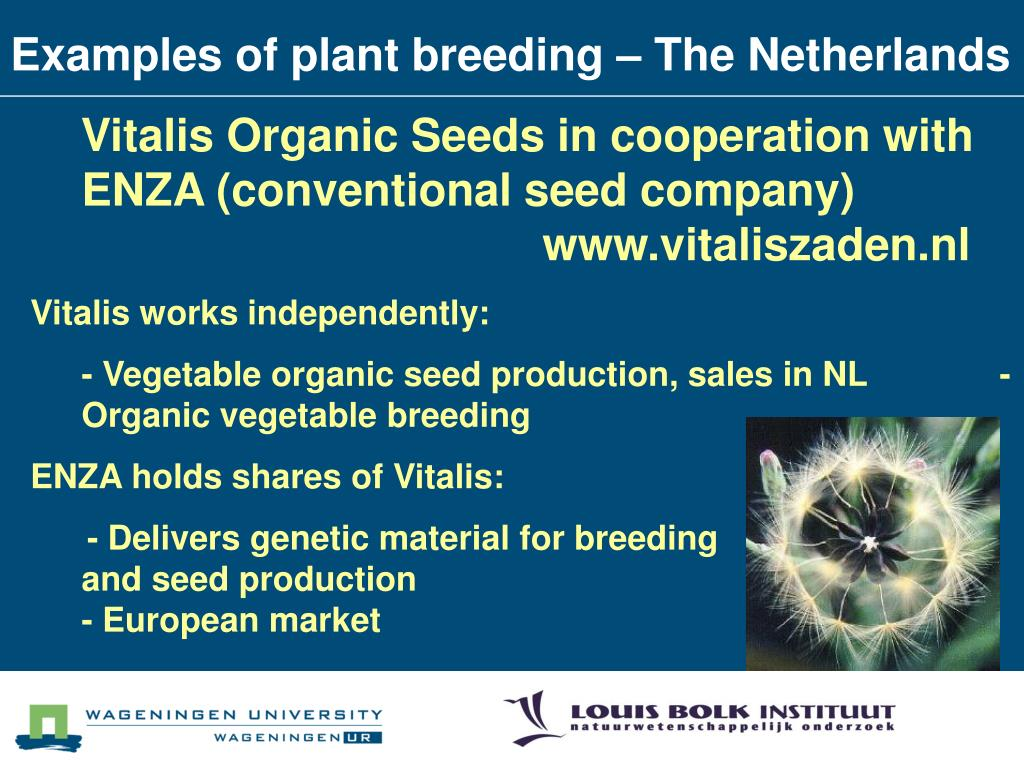 Examples of plant breeding – The Netherlands