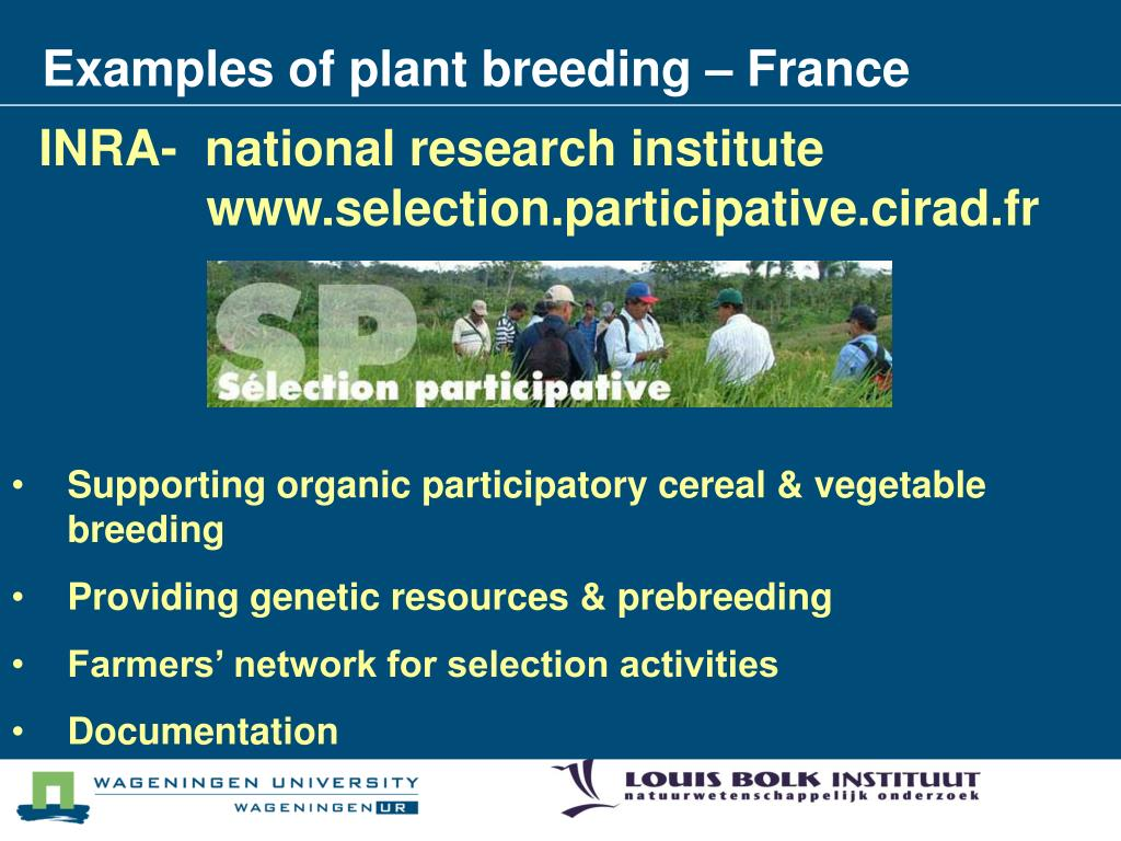 Examples of plant breeding – France
