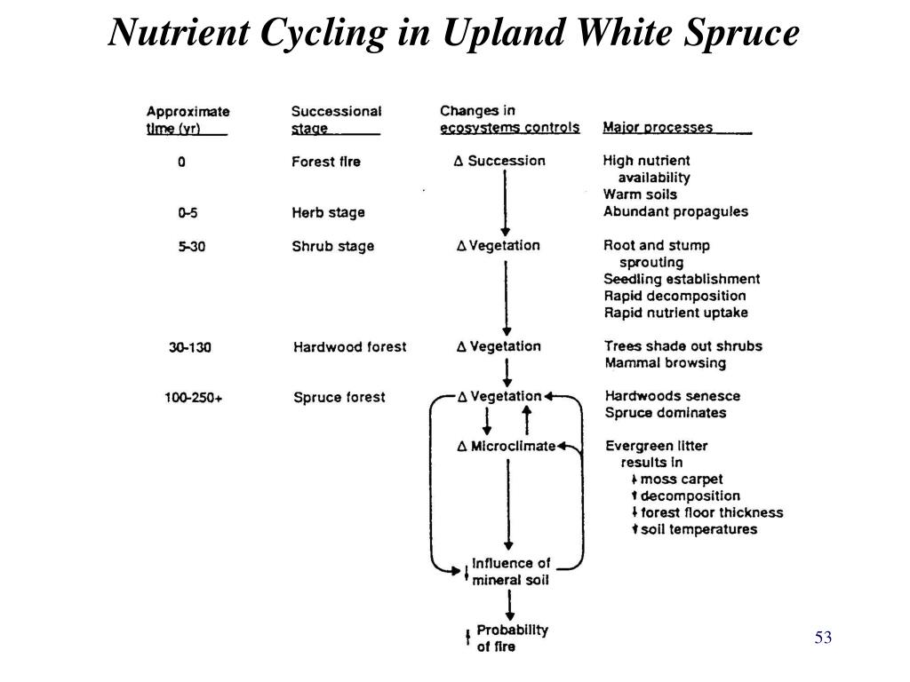 Nutrient Cycling in Upland White Spruce