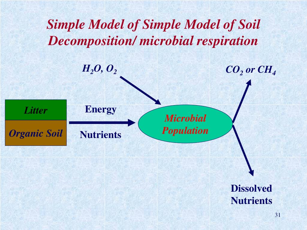Simple Model of Simple Model of Soil Decomposition/ microbial respiration