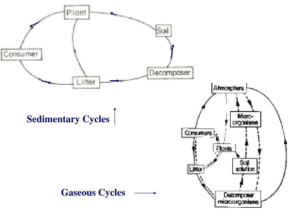 Sedimentary Cycles