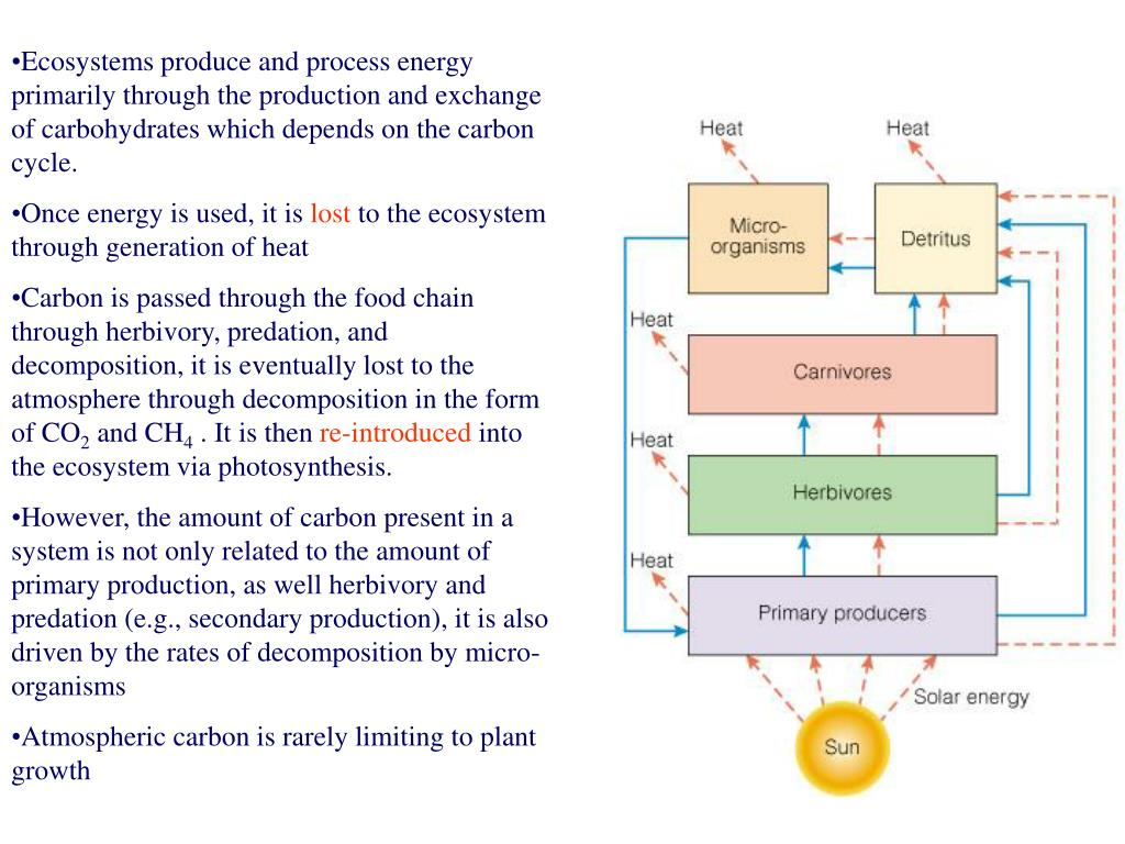 Ecosystems produce and process energy  primarily through the production and exchange of carbohydrates which depends on the carbon cycle.