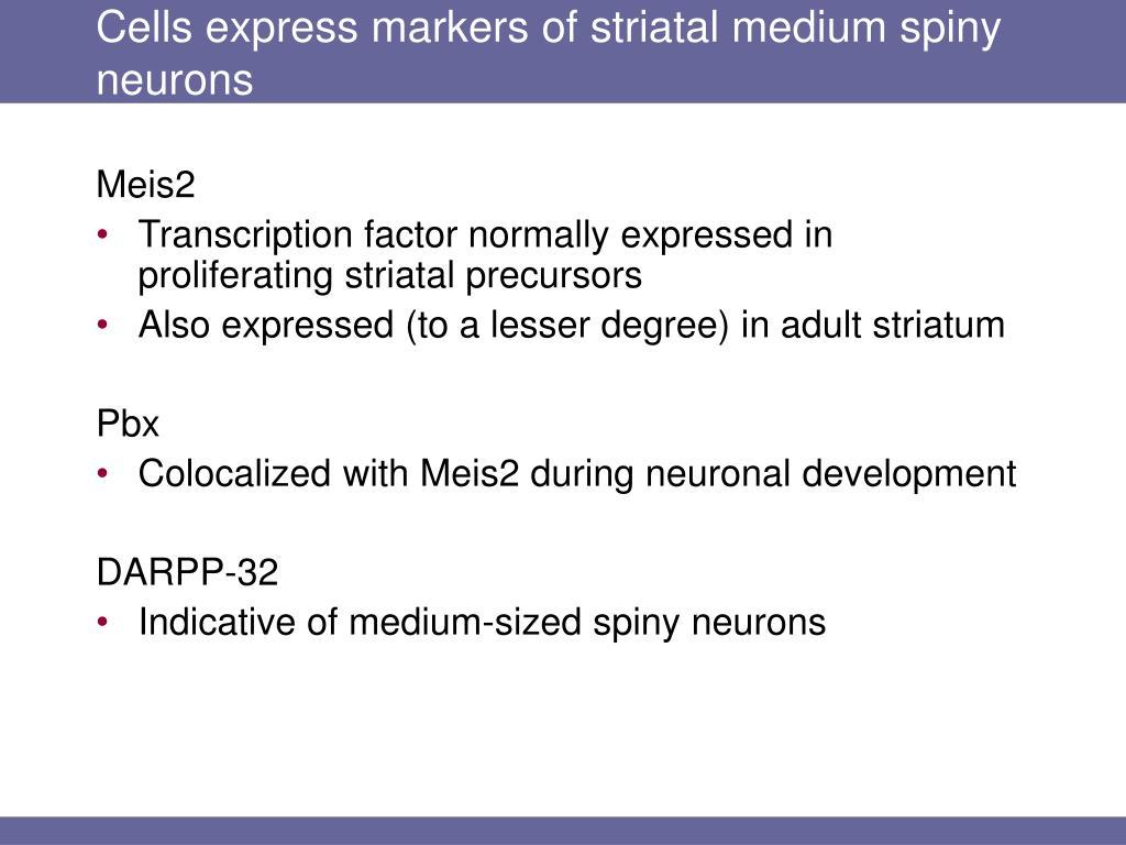 Cells express markers of striatal medium spiny neurons