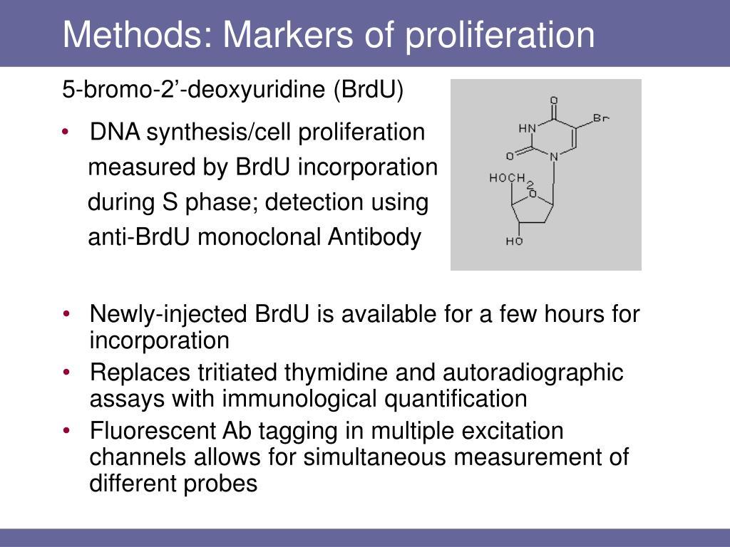 Methods: Markers of proliferation