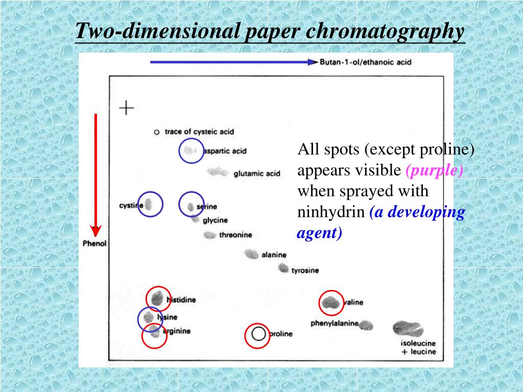 Two-dimensional paper chromatography