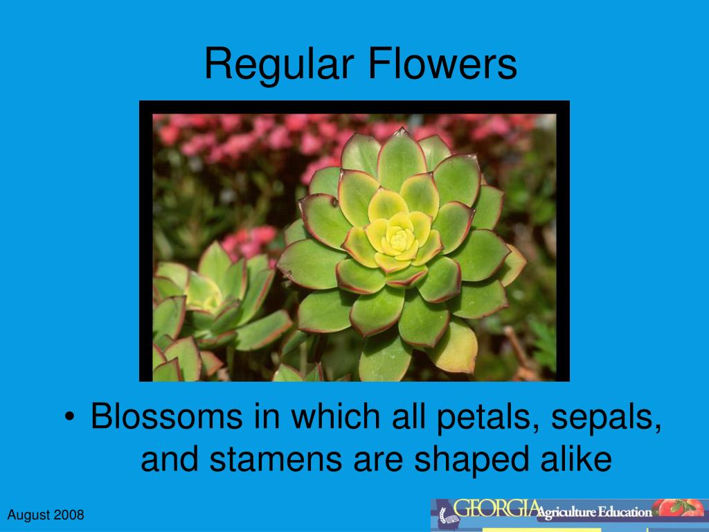 Regular Flowers