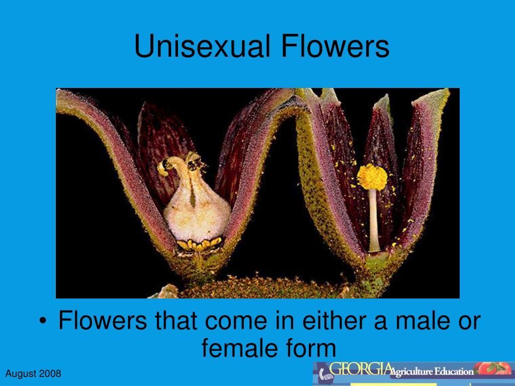 Unisexual Flowers