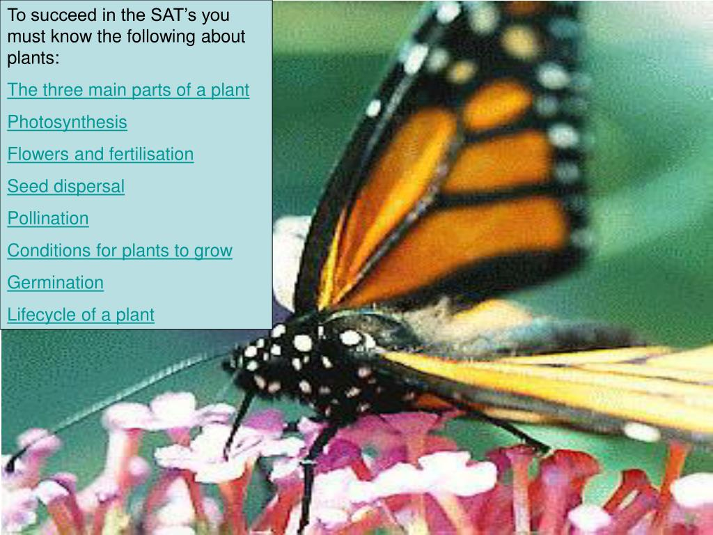 To succeed in the SAT's you must know the following about plants: