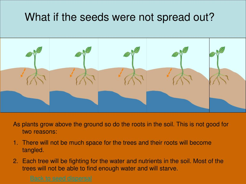 What if the seeds were not spread out?