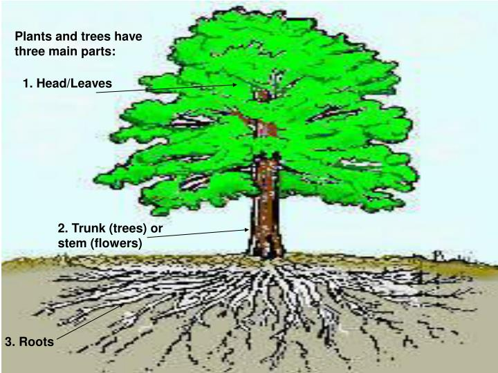 Plants and trees have three main parts: