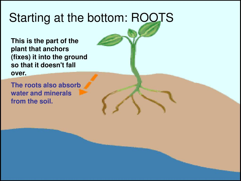 Starting at the bottom: ROOTS