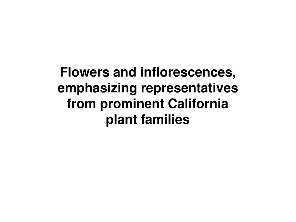 Flowers and inflorescences,