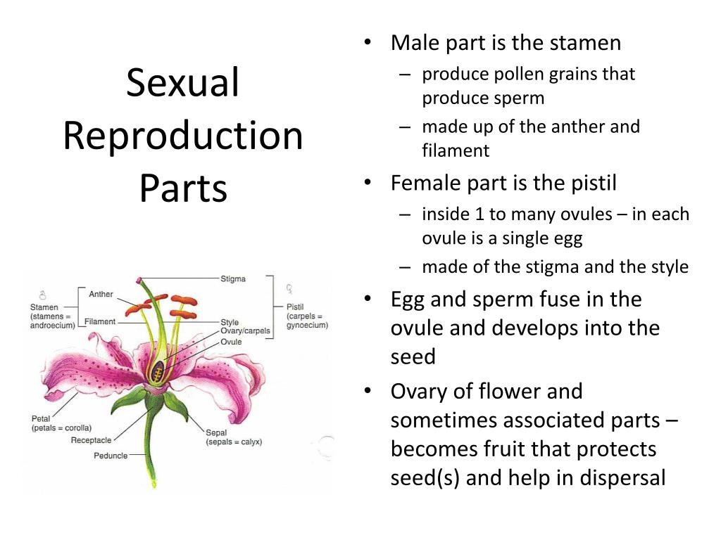 Sexual Reproduction Parts