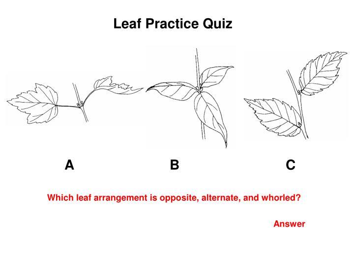 Leaf Practice Quiz