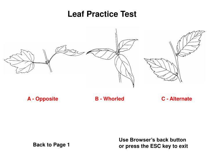 Leaf Practice Test