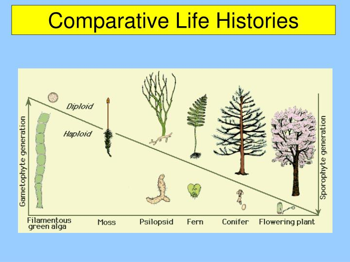 Comparative Life Histories